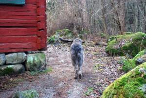 hund_ute